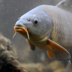 Riveo, visite nocturne des aquariums