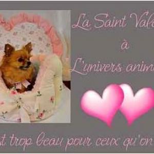 St Valentin du chien