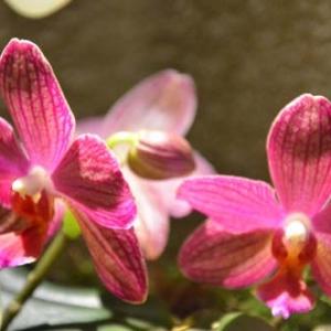 orchidee-5423