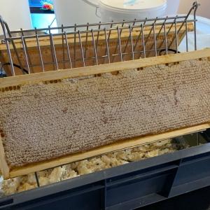 Des ruches sur le toit du Martin's Brussels EU