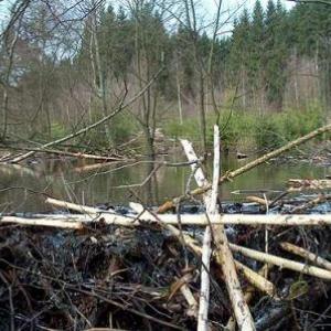 groupe de Namur, devant un barrage de castor à Houffalize