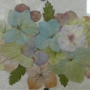 Fernande FINCK  ( Fleurs sechees )