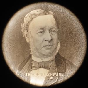 Théodore Schwann, physiologiste, histologiste et cytologiste allemand