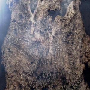 Une peau laineuse avec impuretes