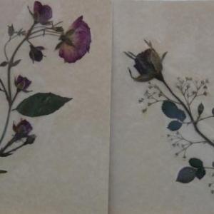 Lucy COLAROL Verviers ( Fleurs sechees ) 087 / 22 57 25