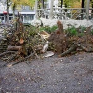 Quelques arbres feront les frais de ce nouvel amenagement