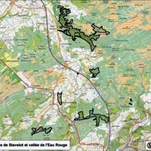 Projet BE33040: Fagnes de Stavelot et vallée de l'Eau Rouge ( partie du site: 349,1 ha )