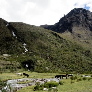 ( Photo 588 ) Huaraz   ( Perou )