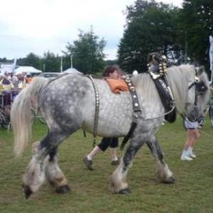 Le cheval de trait precedant les premiers cyclistes