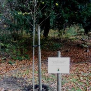 Les tilleuls dans le parc de l'abbaye