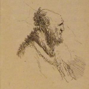 Chauve vieil homme avec une barbe courte ( vers 1635 )