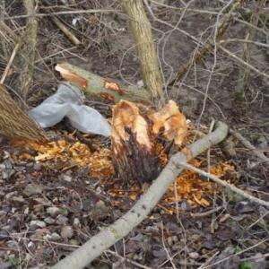 De petits arbres egalement attaques