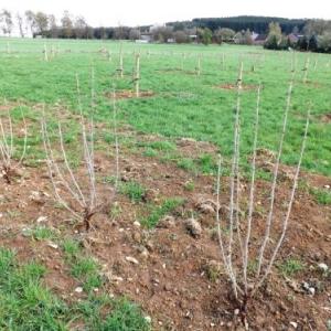 Les 440 jeunes arbres