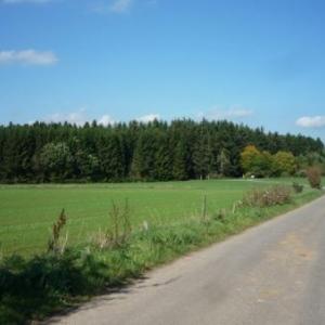 A hauteur de la borne - frontiere 265 : paysage ardennais ( cote Buret - Belgique )