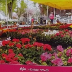 Marche aux fleurs 16 et 17 mai