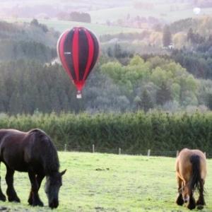 14 Des ballons et des chevaux