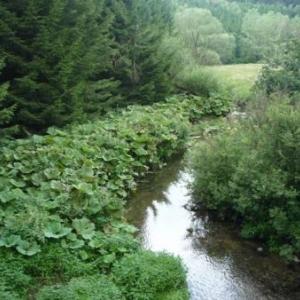 Paysage en zone naturelle le long de la Warchenne