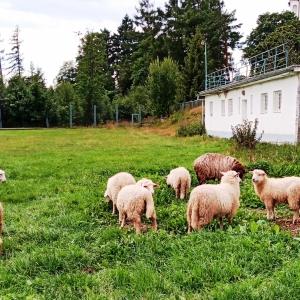Nový Smokovec, proche de la nature ( photo : F. Detry )