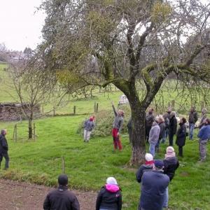 Arbustes et arbres fruitiers