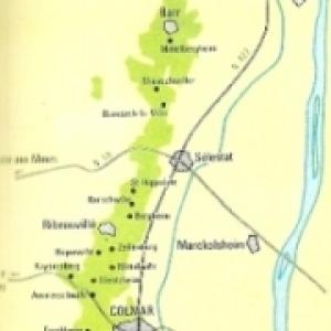 Ruban viticole