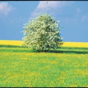 Ardenne