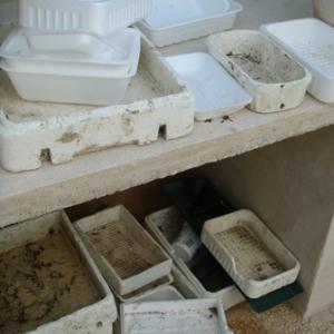 Caissettes de récupération: différentes tailles pour semis différents