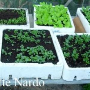 Caissettes avec semis