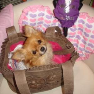 lola adore son sac