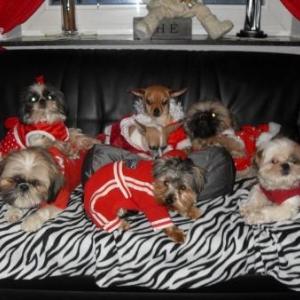 La petite famille Denis vous présente la collection Noël