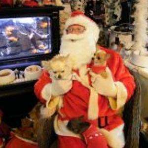 diva et zazou avec papa Noel,les chichis de carinne de Eghezee