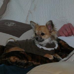 lila vous presente le t-shirt louisdog