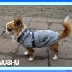muschu sweet puppyangel