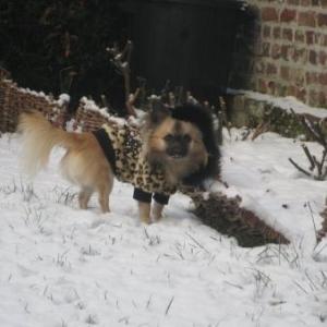 bounty dans la neige