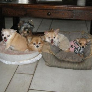 babette,cortes,lilas,maya,lily belle petite famille