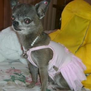 chiwa vous presente son maillot de plage