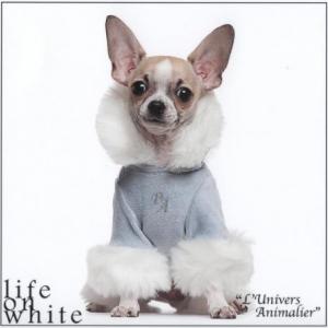 Jo le petit chihuahua de Amélie de Finnevaux