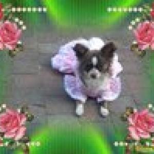 Hommage à la petite kenza , la princesse de mon amie Iolanda