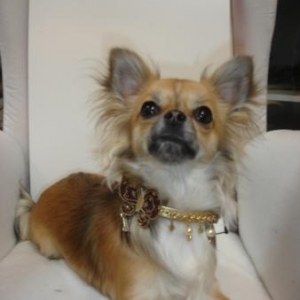lily presente le collier Forpetsonly