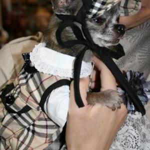 chiwa avec sa jolie robe casquette assortie