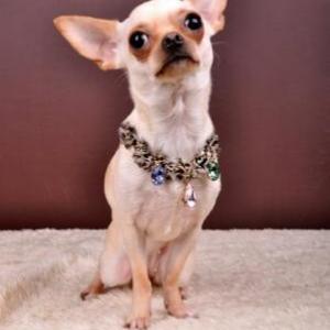 chloe avec son joli collier louisdog