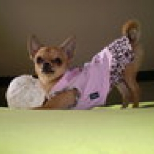 lola avec sa petite robe puppyangel