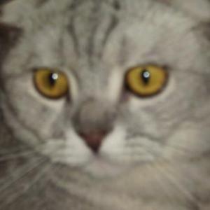 Tom le chat de PATRICIA de Bastogne
