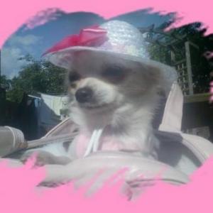 Lola avec son joli chapeau