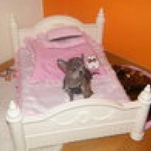 chiwa adore son lit forpetsonly avec son coussin rafraichissant