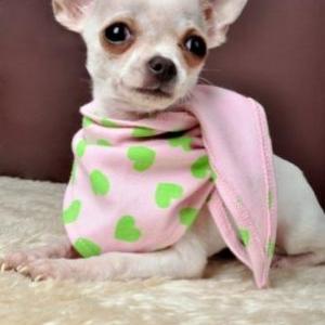 pepita vous presente un joli foulard