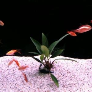 Poissons Exotiques d'eau douce