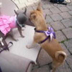 chiwa vous presente la jupe a petits pois et chanel le harnais forpetsonly