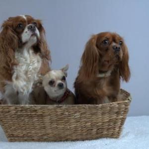 la famille chiens de Isabelle Gomes de Esch-sur-Sure