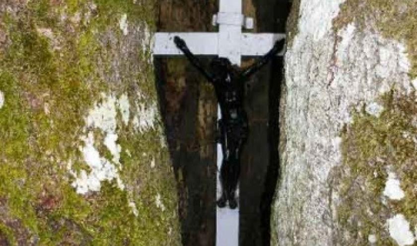 La croix incrustee dans l'arbre, lieu de culte.