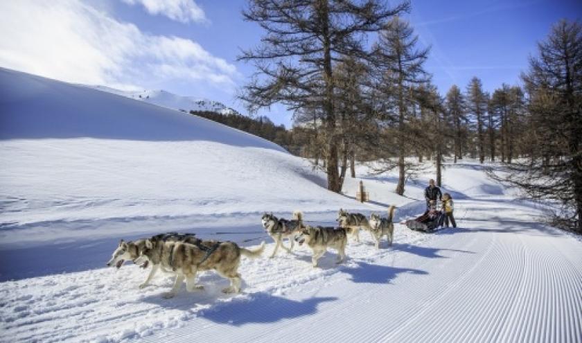 balade-en-chien-de-traineau-3___www-scalpfoto-com[1].jpg